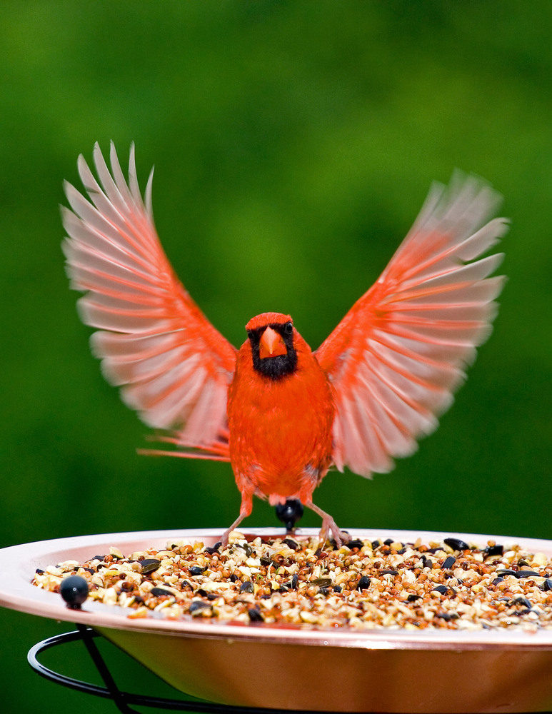 bird on feeder.jpg