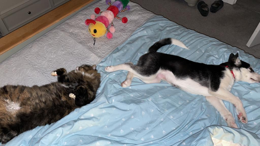 Cat & pup sleeping.JPG