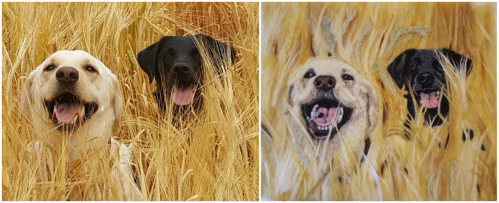 Collage wheat field dogs.jpg