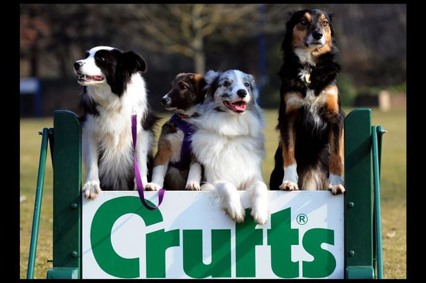 crufts rescues.jpg