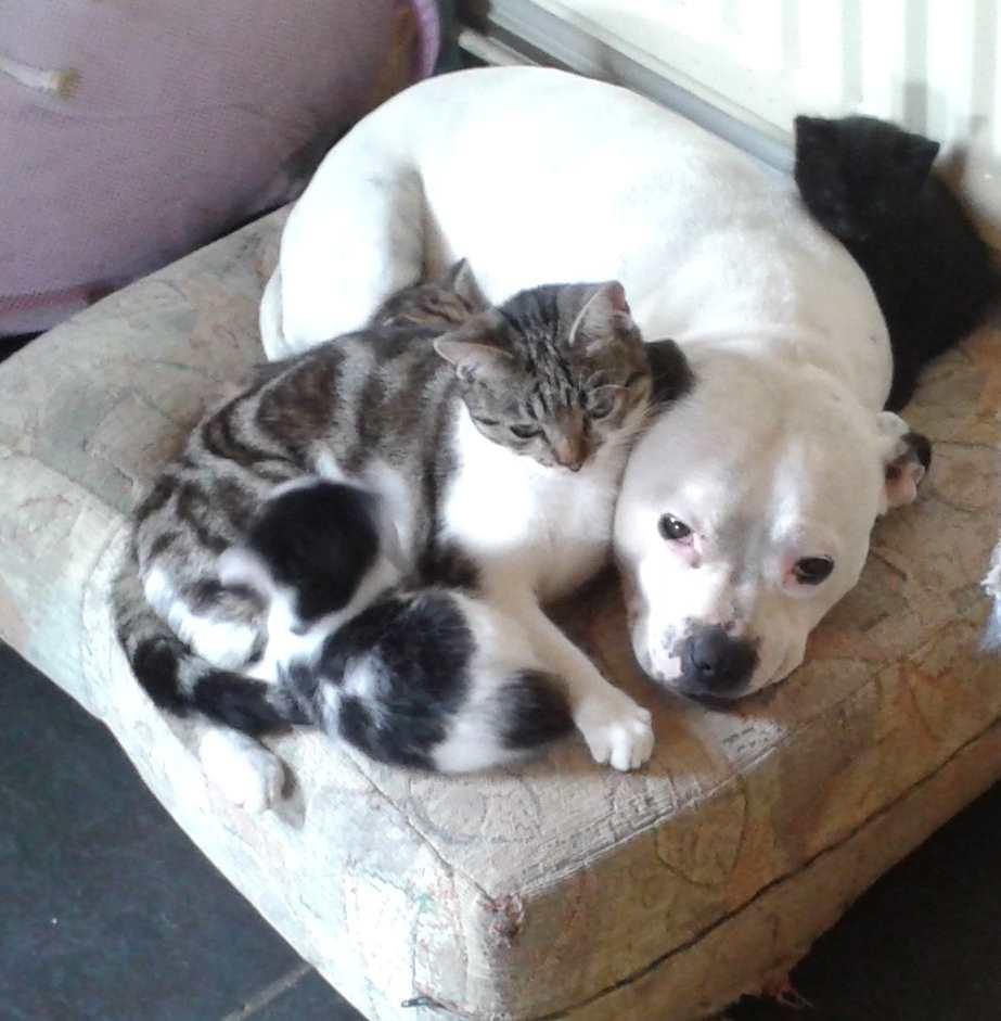 Diva and her family.jpg
