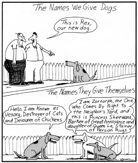dog names.jpg