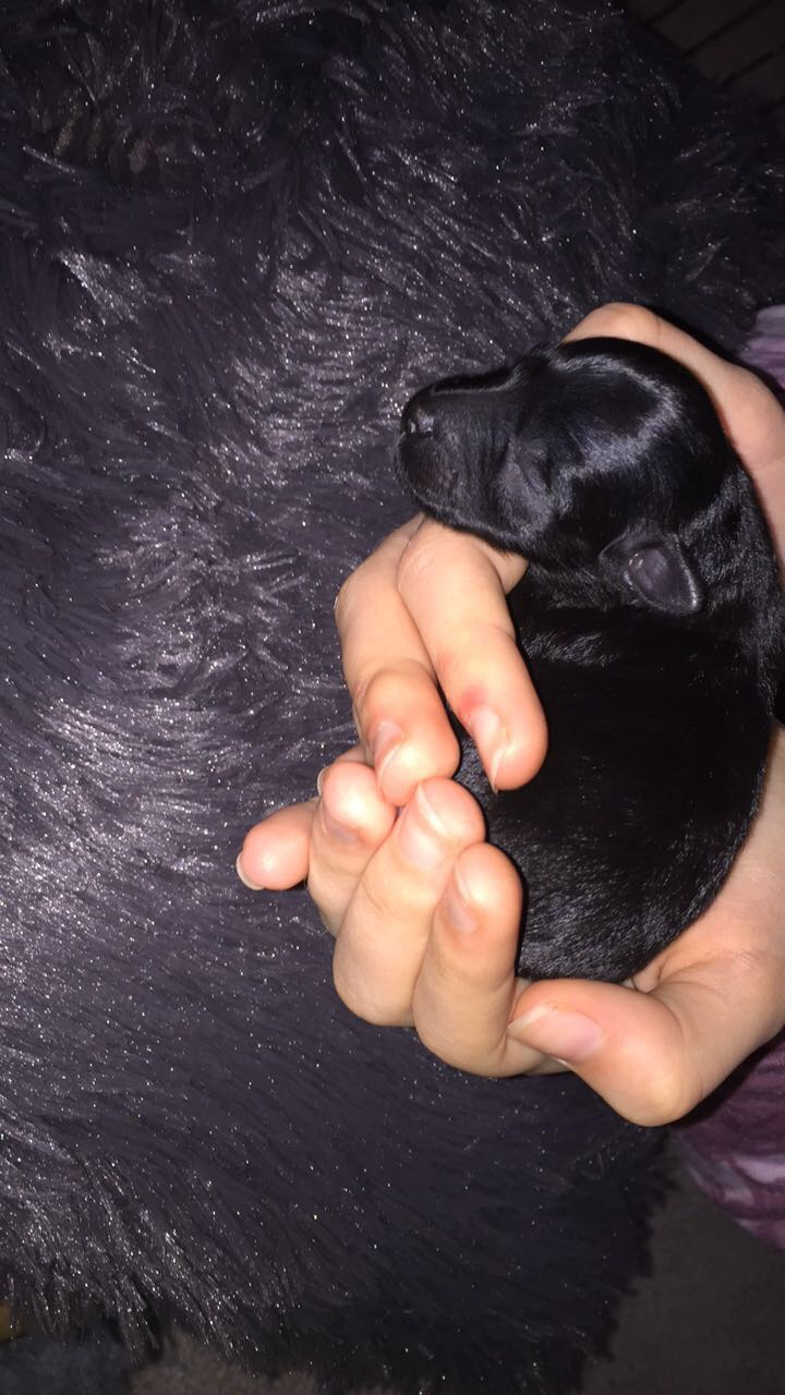 Doris our puppy.JPG