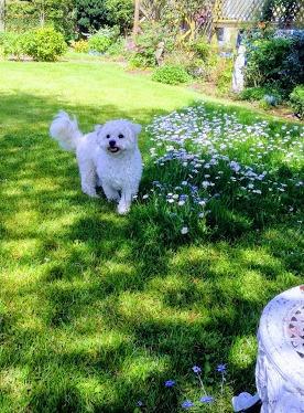 Dudley daisies.jpg