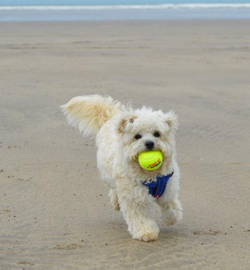 Dudley playing ball.jpg