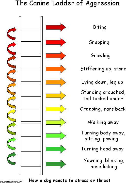 ladderofaggression.png