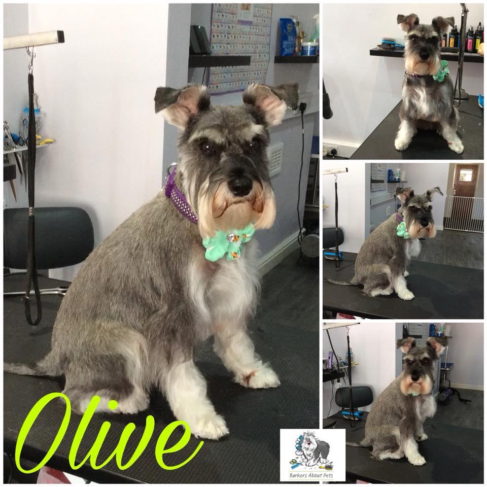 Olive haircut.jpg