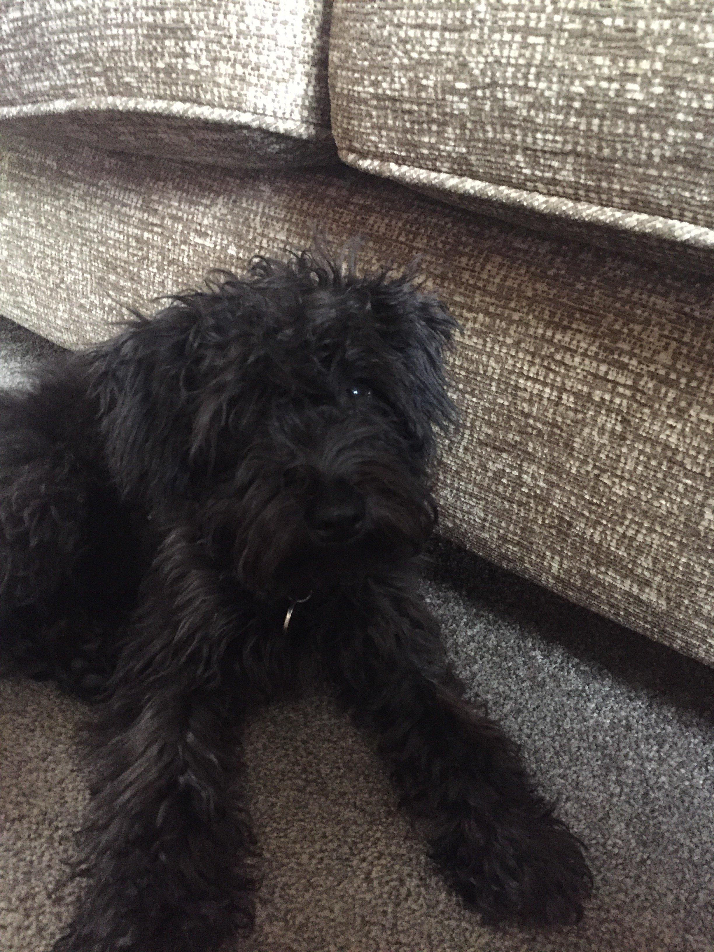 Ollie 4-5 Months Old.JPG