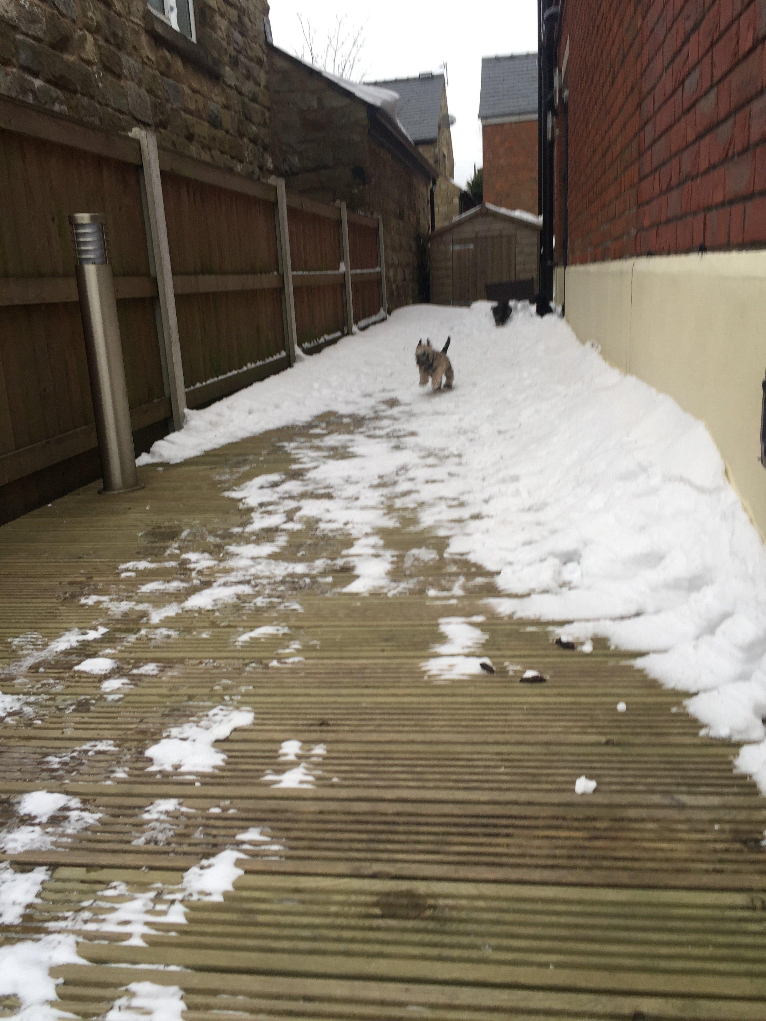 pup snow 1.JPG