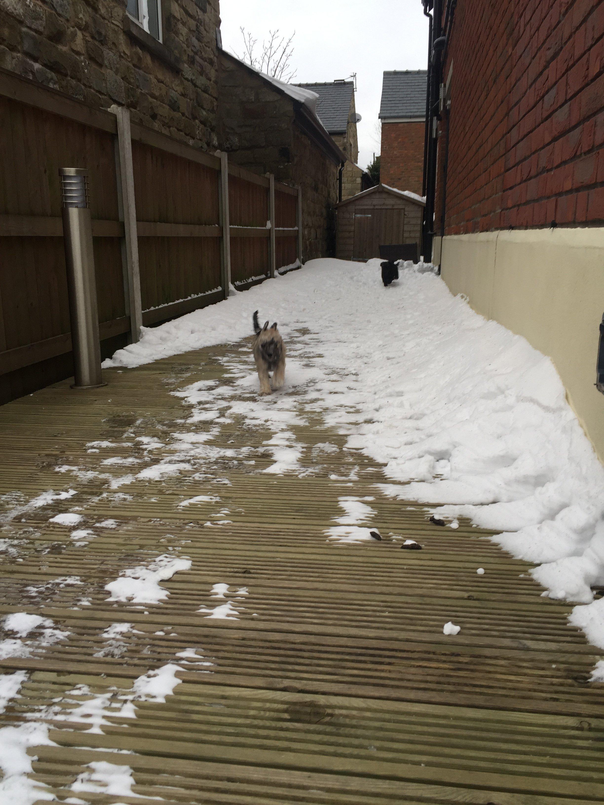 pup snow 2.JPG