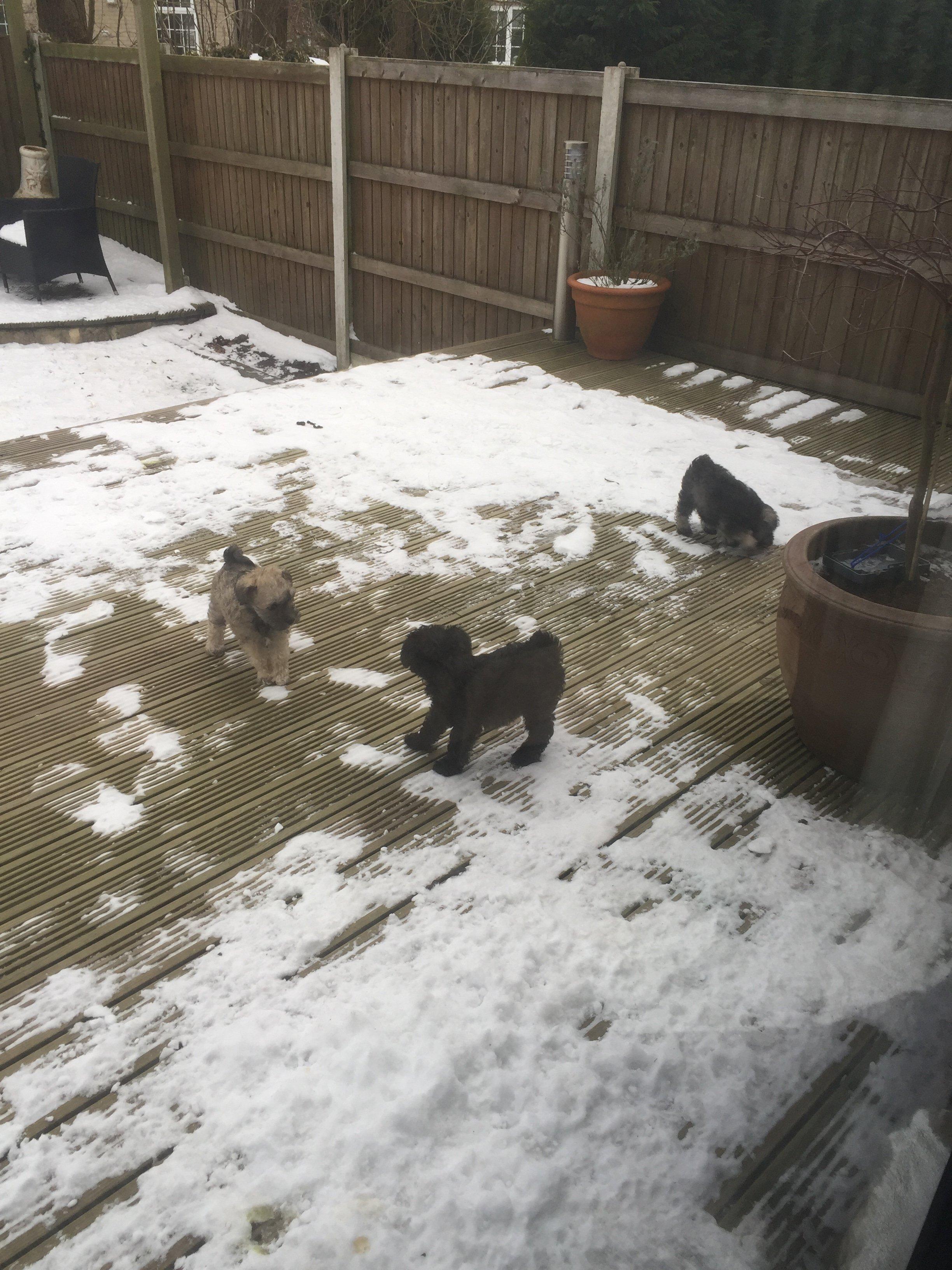 pup snow.JPG