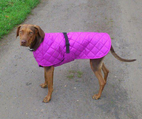 quilted-dog-coat.jpg