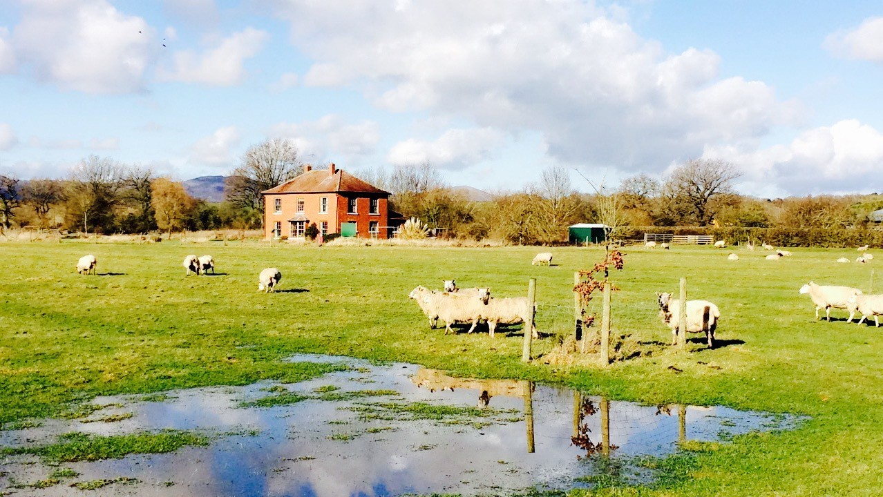 view to house across flooded field from drive.jpg