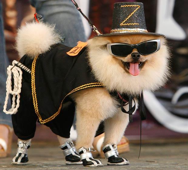 zorro-dog_1746224i.jpg