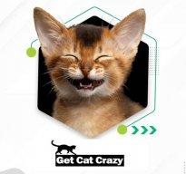 Get Cat Crazy
