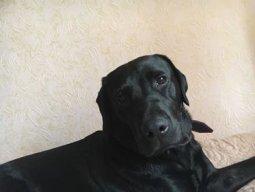 Dog-Mum