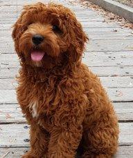 dogpeer